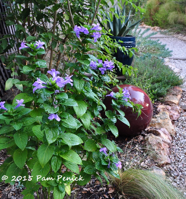 Plant this flipping for philippine violet digging for Philippine garden plants