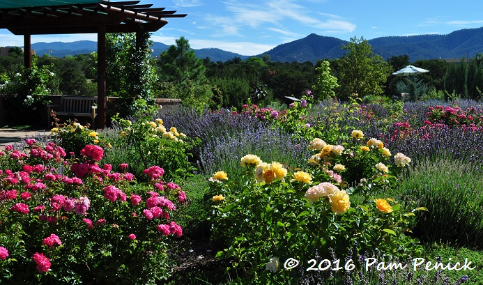 High Desert In Bloom At Santa Fe Botanical Garden Digging
