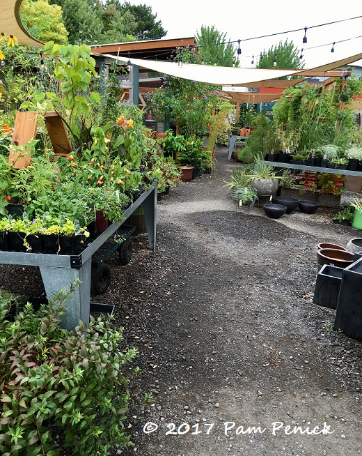 In The Thicket Of Things An Urban Boutique Nursery In Portland