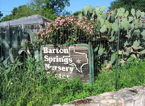 Nurseries in austin thenurseries for Barton creek nursery