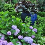 Heuchera in a blue pot harmonizes with lilac hydrangea and purple coneflower