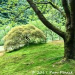 Japanese maple and moss at Portland Japanese Garden in Oregon