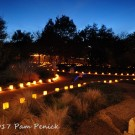 Luminations lights up the Wildflower Center for Christmas