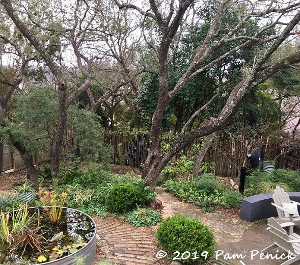 Losing Shade Trees And Replanting Digging