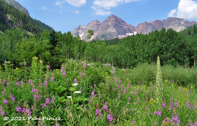 Maroon Bells hike by means of Colorado wildflowers